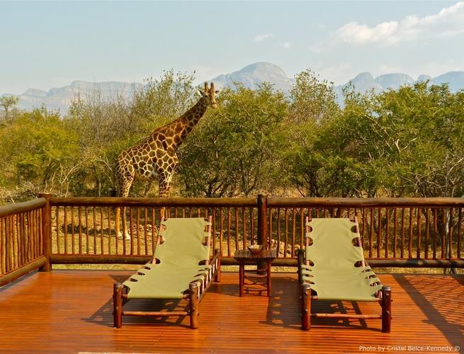 Jungle Furniture